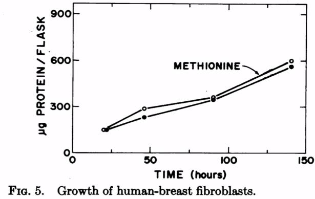 groei-van-menselijke-borst-fibroplasten