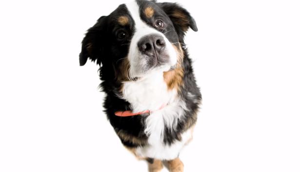 Speciaal getrainde honden kunnen kanker ruiken